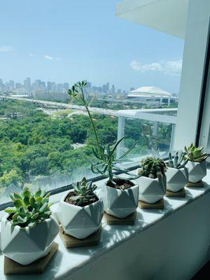Live succulent plants + designed porcelain pots + bamboo saucers for Sale in Miami, FL