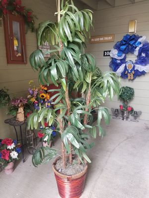 Realistic over 6' tall silk plant in rattan base!! Looks real! Very clean!! for Sale in Lexington, KY