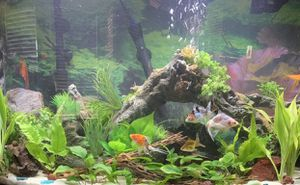 Large Aquarium log w/ plants ornament for Sale in Phoenix, AZ