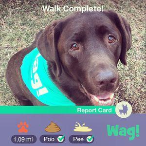 FREE dog walk! 🐾 for Sale in Fairfax, VA