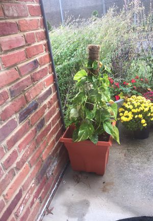 Water plant for Sale in Annandale, VA