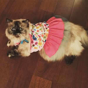 Top paw Sz M floral dress for small dog / cat for Sale in Fairfax, VA
