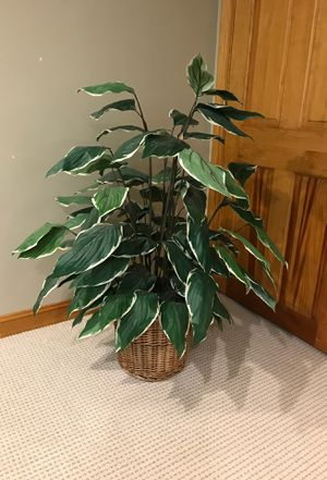 Fake plant for Sale in Franklin, MA