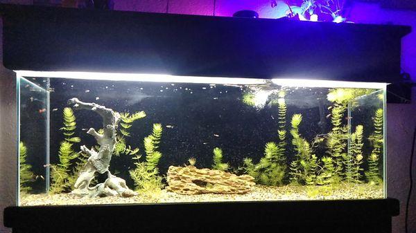 55 GAL. Fish aquarium