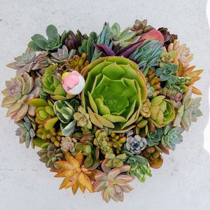 Custom Made Heart Succulents Special Order For Ellie for Sale in Newport Beach, CA