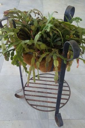 Plant Stand for Sale in Town 'n' Country, FL