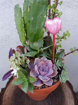 Succulents en maceta de barro for Sale in Bell, CA