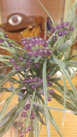 Green plant with purple beads for Sale in Everett, WA