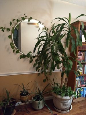 Live plants for Sale in Carrollton, TX