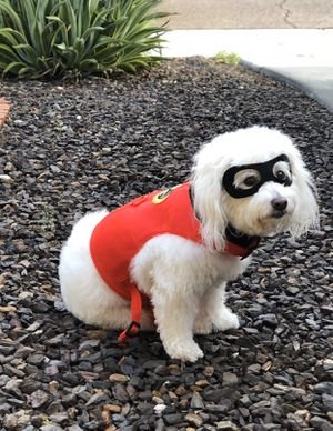 The Incredibles Pet Dog Halloween Costume for Sale in Glendale, AZ