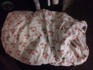 Fitted Twin Sheet $5 for Sale in Fullerton, CA