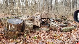 Free fire wood for Sale in Groesbeck, OH
