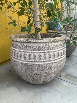 Planter (and tree) for Sale in Pasadena, CA