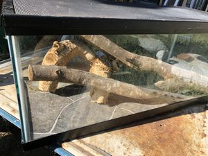 20 gallon long tank for Sale in Chico, CA