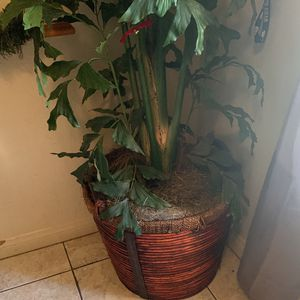 Artificial Plant for Sale in Bakersfield, CA