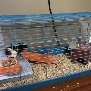 Guinea Pig/Rabbit Cage for Sale in Palmyra, PA