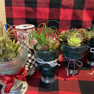 Vintage Insulator Succulent Gift for Sale in Hanford, CA