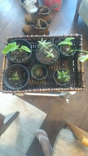 A basket of Plants for Sale in Largo, FL