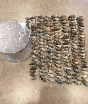 150+ seashells with BBW glass jar/lid for Sale in Charlottesville, VA