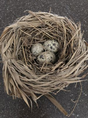 Wooden eggs in nest for Sale in Howell, MI