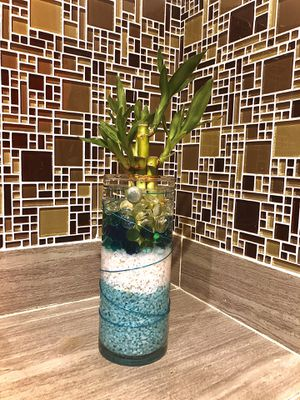 Bamboo plant for Sale in Glendale, AZ