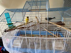2 bird Camry with cage for Sale in Taylor, MI