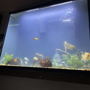 chichild tank for Sale in Compton, CA