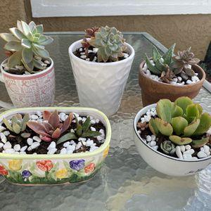 Succulent Plants for Sale in Aliso Viejo, CA