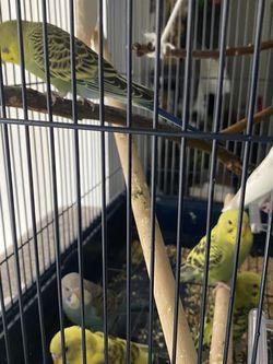 Bird Cage for Sale in Anaheim,  CA
