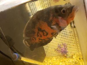 Fish tank filter for Sale in Westminster, CA