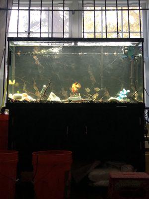 fish tank 75 gallon for Sale in Woburn, MA