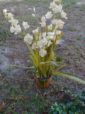 Fake flower plant for Sale in Christmas, FL