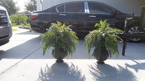 Two beautiful fern flower pots for Sale in Union Park, FL