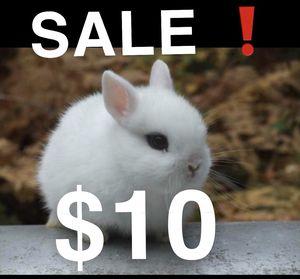 CUTE for Sale in Long Beach, CA