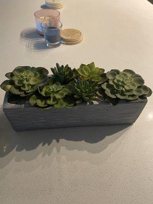 Decorative Plant for Sale in Hyattsville, MD