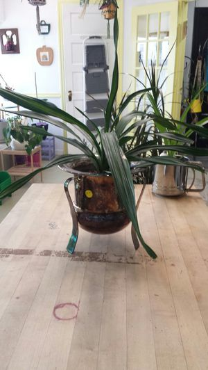 Live plant in a remarkable metal pot, one of a kind. for Sale in Tacoma, WA
