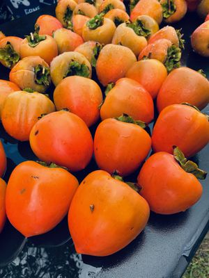 Organic Hachiya Persimmons for Sale in La Verne, CA