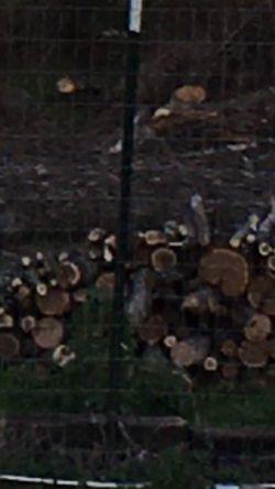Free Fire Wood for Sale in Dawson,  TX