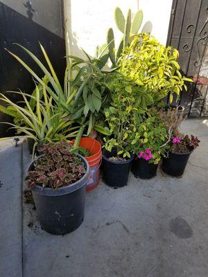 Garden/Plants for Sale in El Monte, CA