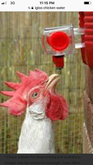 Chicken waterer for Sale in Elmira, NY
