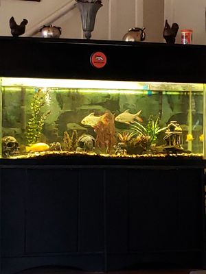 55 gallon fish tank for Sale in Star Valley, AZ