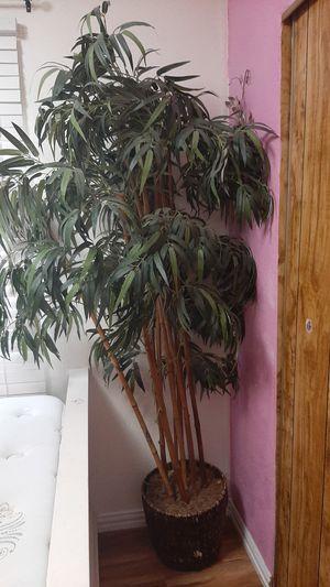 Plant for Sale in Alvarado, TX