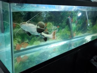 125gl Fish Tank With Everything You Need for Sale in New York,  NY