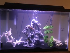 Fish tank for Sale in Groveport, OH