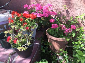 Flower pots for Sale in Tucson,  AZ