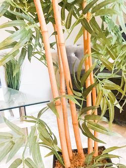 Tall Bamboo Silk Plant. $45.00 Moving 3.5ft for Sale in Boynton Beach,  FL