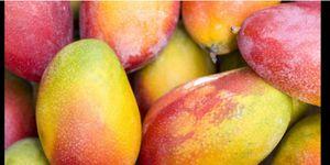 Mangos/ picked fresh daily for Sale in Boynton Beach, FL