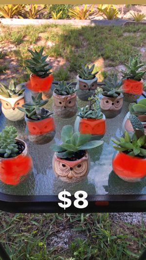 Mini Owl Succulents for Sale in North Miami Beach, FL