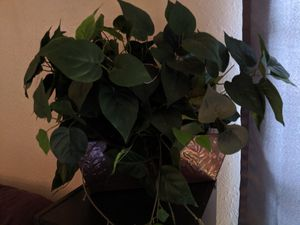 Faux plant for Sale in Round Rock, TX