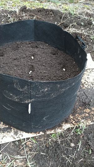 Cloth pea patch 25 gal for Sale in Graham, WA